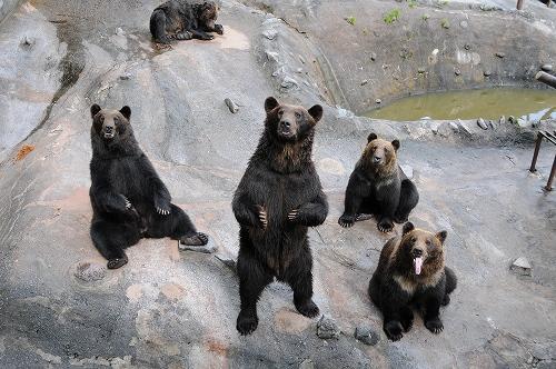 クマの画像 p1_7